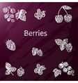 chalk berries vector image vector image