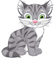 grey cat vector image vector image