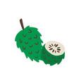 atemoya or cherimoya green delicious fruit vector image vector image