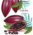 cocoa beans realistic detailed exotic vector image