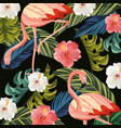 flamingos animal with tropical flowers and leaves vector image