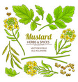 mustard plant elements isolated vector image