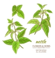 nettle set vector image vector image