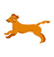 spaniel running isolated on white background vector image vector image