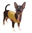 Chihuahua Dog 1 vector image vector image