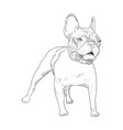 french bulldog hand drawn sketch isolated on vector image vector image