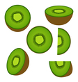 Kiwi fruit and his sliced segments isolated vector image