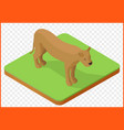 lioness isometric vector image