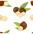 seamless texture with groups of macadamia with vector image vector image