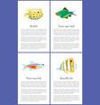 boxfish and green tiger barb vector image vector image