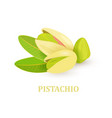 group of pistachio with leaves on white vector image