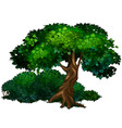 large tree oak nature forest ecology concept vector image vector image
