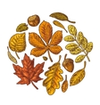 Set leaf and acorn vintage colorful vector image vector image