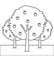 three apple trees bush foliage fruit natural vector image