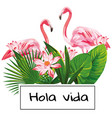 tropical composition hola vida slogan pink vector image vector image