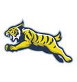 wildcat mascot vector image vector image