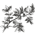 roses leaves vector image
