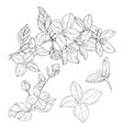 plant in blossom branch with flower ink sketch on vector image