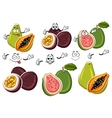 Exotic cartoon guava passion fruit papaya fruits vector image vector image