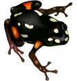 Poison Frog vector image vector image