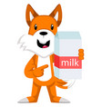 fox with milk on white background vector image vector image
