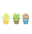 Lovely Trees and Plants in Terracotta Flower Pots vector image vector image