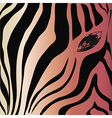 Zebra head and eye on a colored background vector image vector image