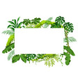 background with jungle plants vector image vector image