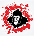 gorilla head king kong face angry big monkey vector image vector image