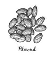 ink sketch of almond vector image