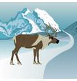 wild reindeer caribou vector image vector image