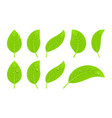green realistic leaves vector image vector image