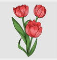 red lily flower vector image