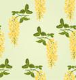 Seamless texture Laburnum branch decorative shrub vector image