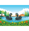 A river with two ducks vector image vector image
