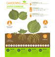 cabbage beneficial features graphic template vector image