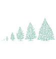 christmas tree growth stages size choice vector image