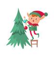 elf decorates christmas tree santa claus cute vector image