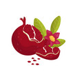 pomegranate juicy fresh fruit with leaves and vector image