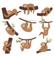 sloth on branch cute little kid sleepy animal on vector image vector image