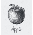 hand drawn apple engraving style hand vector image