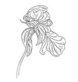 peony flower ink sketch on white background vector image vector image