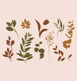 set leaves and branches silhouette leaf vector image