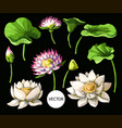 set of waterlily hand draw isolated vector image