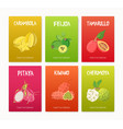 bundle of colorful flyers with tasty ripe juicy vector image vector image