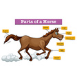Diagram showing parts of horse vector image vector image