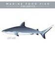 Gray Shark Marine Food Fish vector image vector image