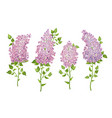 set of lilac flowers vector image