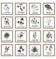 Collection of Ayurvedic Herbs vector image