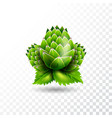isolated hop on transparent background vector image vector image